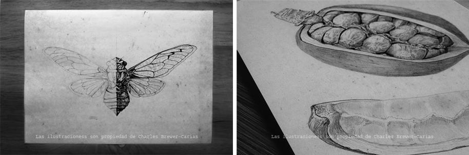 ilustraciones-charles